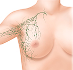 linfonodos axilares